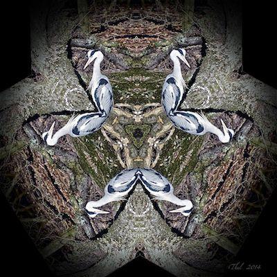Graureiher im Kaleidoskop