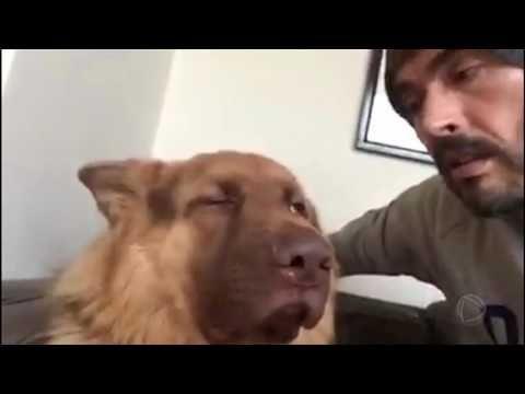 Não é possível! Cachorrinho fica indignado ou ouvir o próprio ronco - YouTube