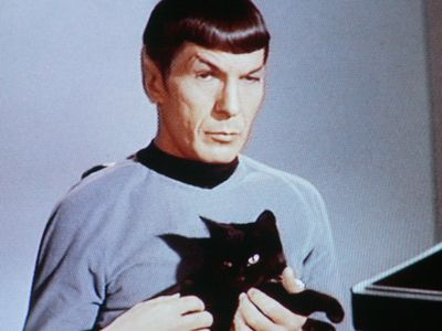 "Mr. Spock (original, played by Leonard Nimoy) with cat, from Celebrities With Cats -- E̶p̶i̶s̶o̶d̶e̶ ̶i̶s̶ ̶""̶C̶a̶t̶s̶p̶a̶w̶""̶ [http://en.wikipedia.org/wiki/Catspaw_%28Star_Trek:_The_Original_Series%29] -- SH: 3/2015: I stand corrected; the cat is Isis from ""Assignment: Earth"" [http://en.wikipedia.org/wiki/Assignment:_Earth]"