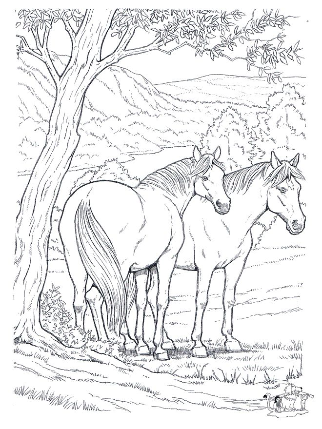 free coloring pages horse horses