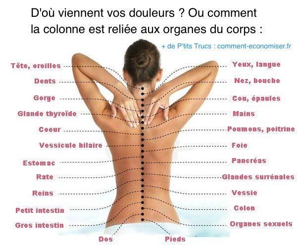 Si vous ressentez une douleur quelque part dans votre corps, c'est peut-être que vous avez un problème à votre colonne. Heureusement, voici un schéma pour vous aider à comprendre comment les organes sont reliés à la colonne vertébrale. Découvrez l'astuce ici : http://www.comment-economiser.fr/vrai-causes-de-vos-douleurs-corps.html?utm_content=bufferdbbac&utm_medium=social&utm_source=pinterest.com&utm_campaign=buffer