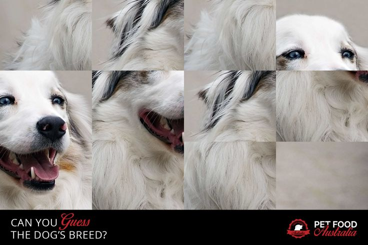 Guess the dogs breed #dogs