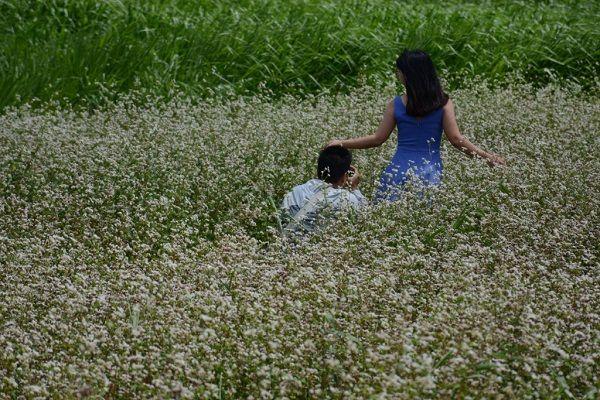 Cánh đồng hoa tam giác mạch nở rộ tại Lâm Đồng - Noitoiseden.com