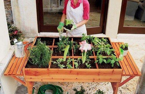 Bir organik sebze bahçesi bizlere yememiz için çok çeşitli meyve ve sebze sağlayabilir. Bazı insanlar bunu bir tür terapi, yeryüzüyle iletişim kurmanın bir yolu olarak görürken, başkalarıysa bunu daha sağlıklı beslenmenin ve daha doğal ürünler tüketmenin bir yolu olarak görürler.