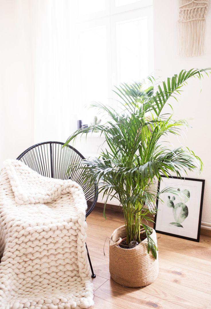 die besten 25 pflegeleichte zimmerpflanzen ideen auf. Black Bedroom Furniture Sets. Home Design Ideas