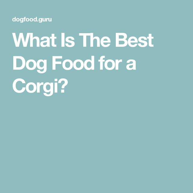 What Is The Best Dog Food for a Corgi?