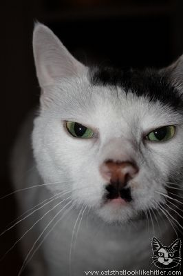 awesome Kitler!  he's the meanest looking Kitler I've ever seen ... i want a tuxedo / kitler cat :)