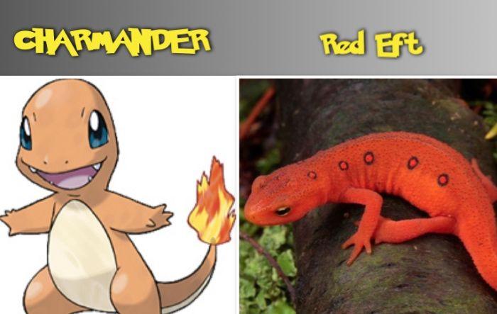 CHARMANDER red eft