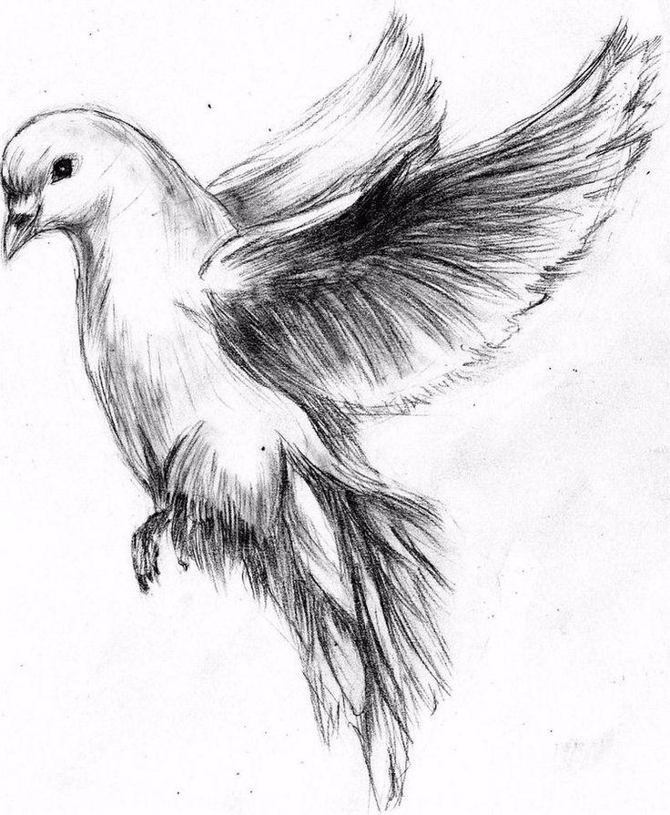 Картинки рисунок карандашом птицы
