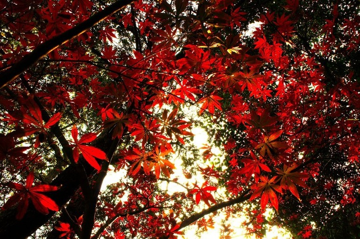 Autumn 2012. What a beautiful sight.
