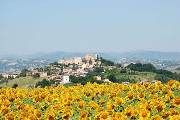 Panoramica di Monte Vidon Corrado #marcafermana #montevidoncorrado #fermo #marche