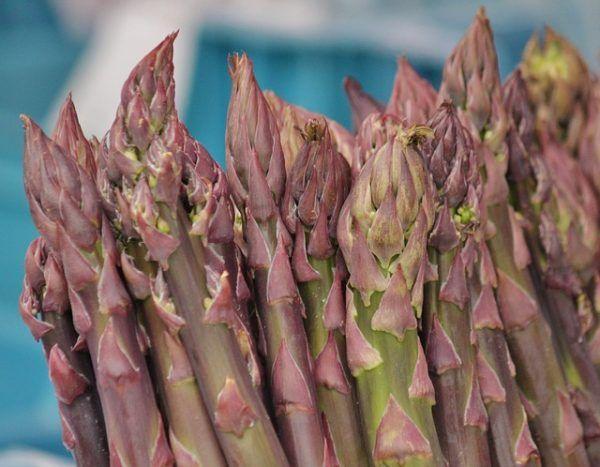 Asparagi al naturale come si conservano asparagi bianchi verdi in salamoia procedimento sterilizzazione tempo richiesto mantenere asparago come fare