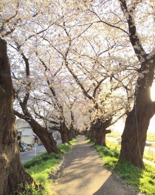 26 Wallpaper Taman Bunga Yang Indah Bunga Wallpapers Backgrounds Free Wallpapers Download Download Gambar Taman Bunga Y Di 2020 Bunga Sakura Fotografi Alam Gambar