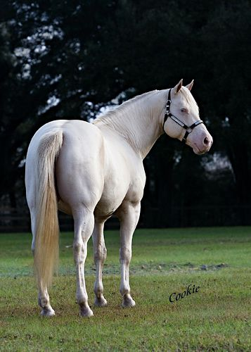 The  Best Horse Sales Ideas On   Pretty Horses Blue