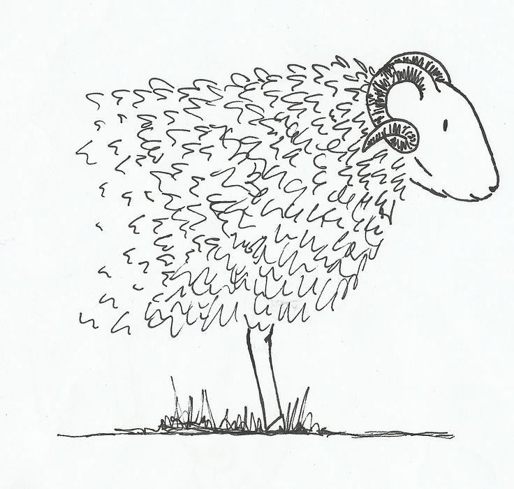 Drents Heide schaap - illustratie - Vera Vos