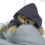 Dogs Who Deserve More Followers Than You: Doug The Pug