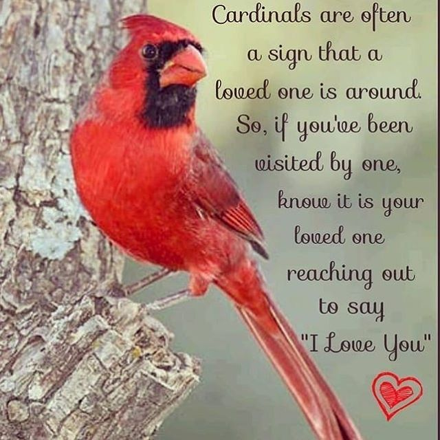 I Ve Had So Many Visits Lately By These Birds Bird Quotes