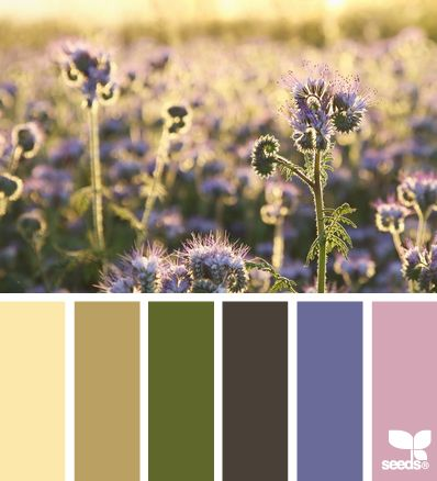 Morning Tones: This calming color scheme of lavender and sage is great for the bedroom -- where you can be the most relaxed. | design-seeds.com: Colors Pallets, Kitchens Colors, Design Seeds, Bedrooms Colors, Mornings Tones, Colors Palettes, Colors Schemes, Colour Palettes, Colors Boards