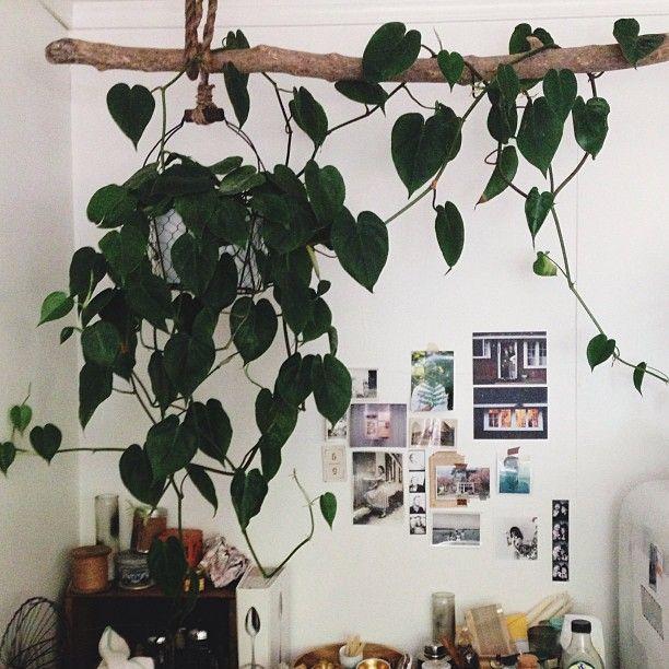leuk idee om de hangplant over een tak te draperen