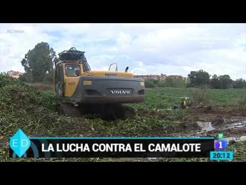 PROYECTO FC | Flipped Classroom. Video donde se presenta la problemática situación del río Guadiana debida a la planta del Calamote.