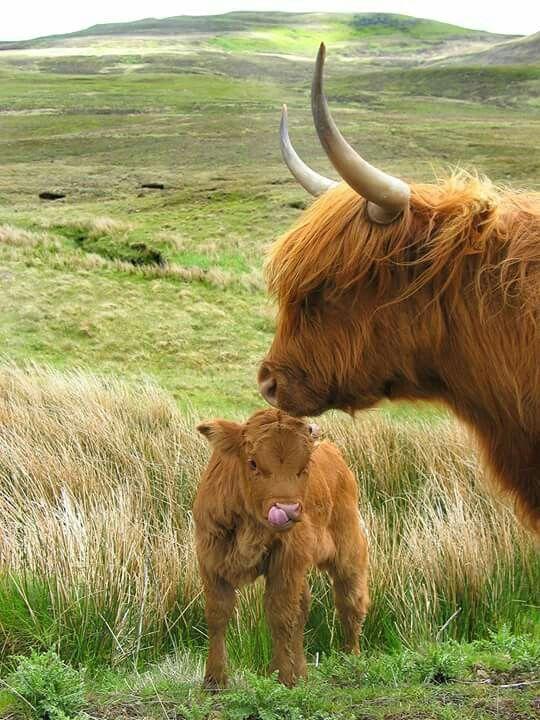 13156 best images about Scotland on Pinterest | Ben nevis ...