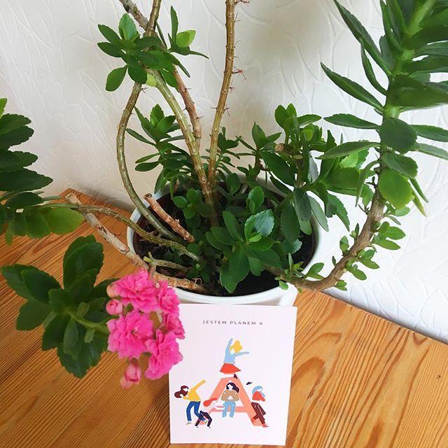 Czy Jestescie Dla Siebie Planem A Absolutnym Priorytetem Macie Zawsze Plan B Dbacie By Zycie Was Zaskakiwalo A Nie Zmuszalo Do Planter Pots Planters Plants