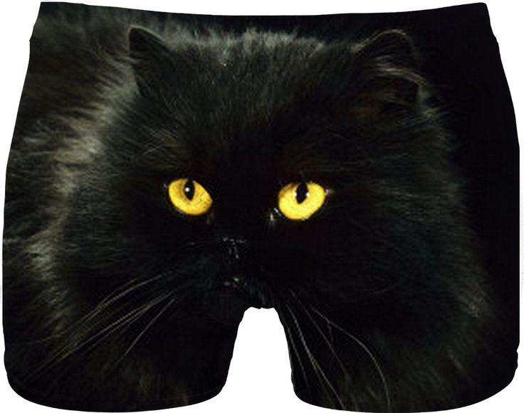 Check out my new product https://www.rageon.com/products/black-cat-underwear on RageOn!