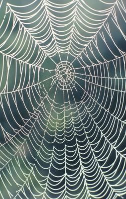 How to Make a Giant Spider Web