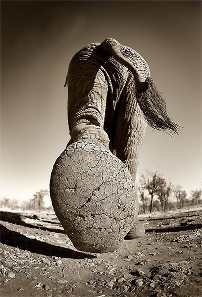 autopsiart:  Patte d'éléphant, Delta de l'Okavango, Botswana, 2005 deBruno Calendini