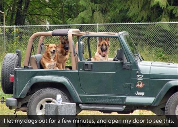 anjing lagi naik mobil