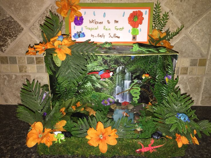 Tropical Rainforest Diorama (With images) Rainforest