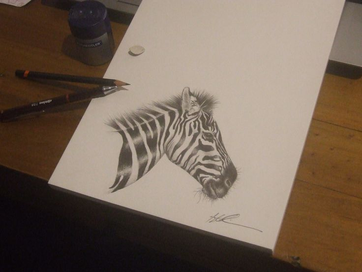 Zebra  | Medium: Graphite |  FB: Hayley Robinson Art  | Instagram: @hayleyrobinsonart