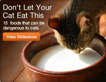 Don't let your cat eat this- 15 foods that can be dangerous to cats (slideshow).