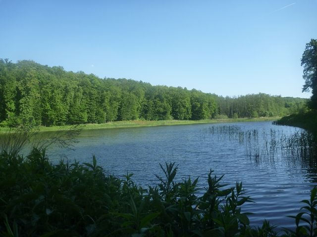 Fish farm for sale in the magical Bakony mountains