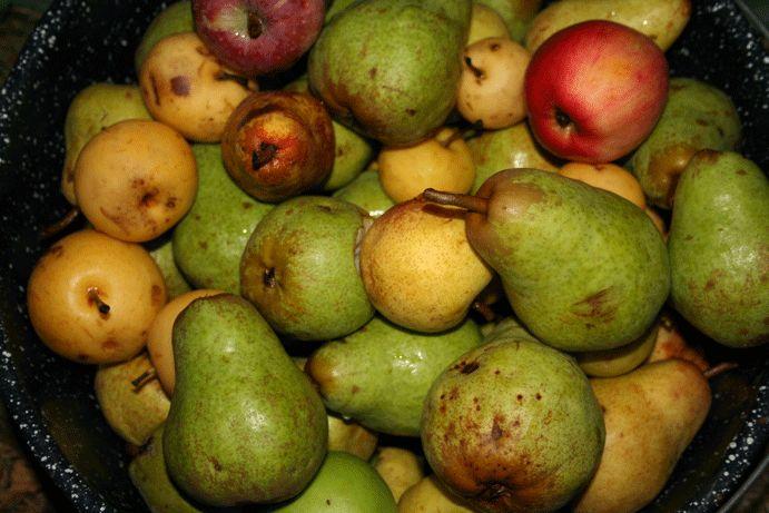 Making Pear Cider
