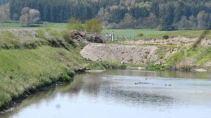 20000 qm  Seeanwesen in Alleinlage  mit Alpenblick (Mehr  Land möglich)