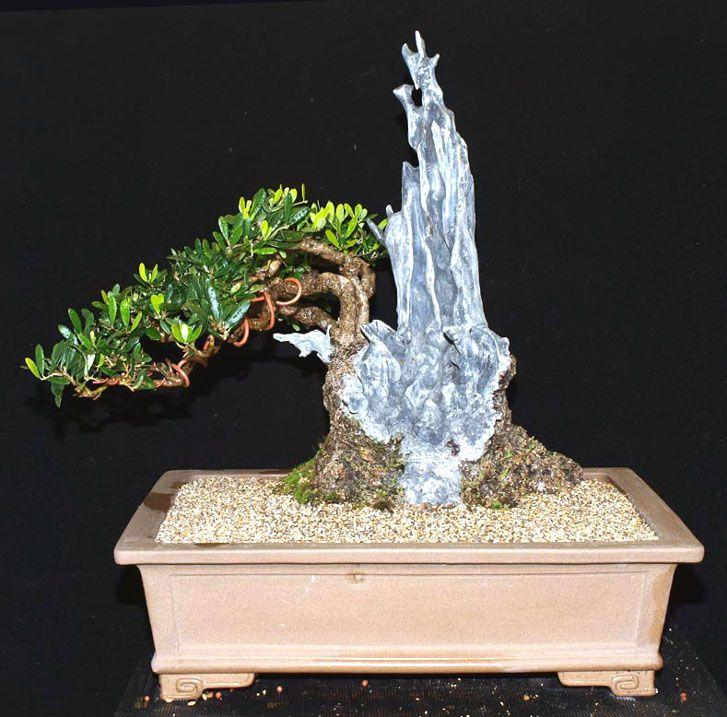 les 25 meilleures id es de la cat gorie olivier bonsai sur pinterest olea europaea bonsa et. Black Bedroom Furniture Sets. Home Design Ideas