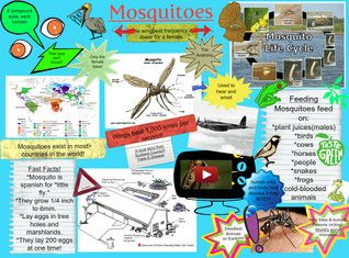 Mosquitoes are a family of small, midge-like flies: the Culicidae. Although a few species are harmless or even useful to humanity, most are considered a nuisance because they consume blood from living vertebrates, including humans. The females of many species of mosquitoes are blood-eating pests. In feeding on blood, some of them transmit extremely harmful human and livestock diseases, such as malaria, yellow fever, and filariasis. #Glogster #Mosquitoes