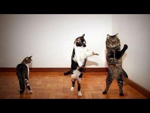 Dans Eden Hayvanlar Komik Hayvanlar Dansı  [Komik Evcil Hayvanlar]