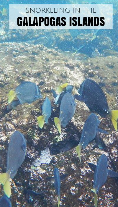 Snorkelling in the Galapagos Islands. Part of an interview with The Russian Abroad.