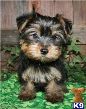 JESS. THIS WILL BE YOUR DOG, BENEDICT XD
