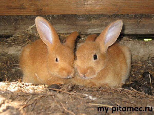 Разведение кроликов на ферме