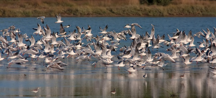 Sani offers guests a chance to watch some of the amazing birds in the Sani Wetlands area, depending on the season, including migrating mute swans, black winged stilts and little egrets. Location: Halkidiki, Greece