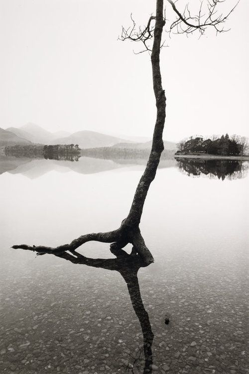 Fay Godwin: :Flooded tree  i Love the contrast between the different shades in this image, how the foreground/focal point is very dark and the background is white.