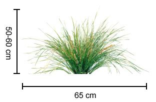 TANIKA® Lomandra is a reliable, tough and beautiful landscape plant   Strappy Leaf Plants