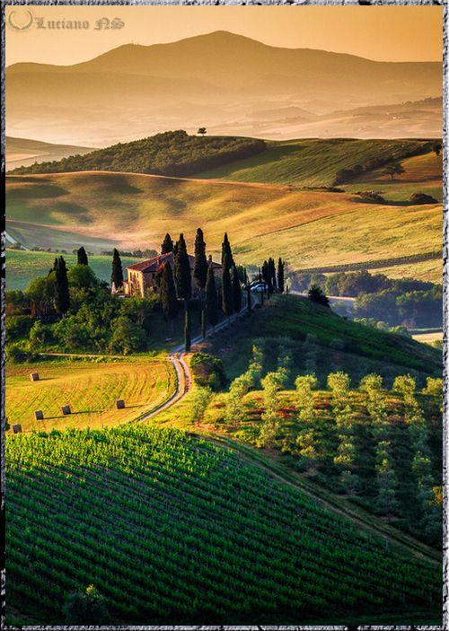 Vineyard at springtime, in Tuscany, Italy.
