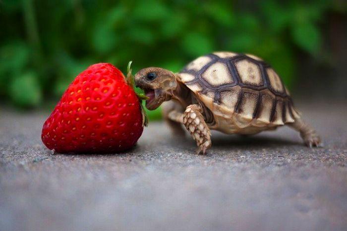 25 Fotos de animales bebés que te derretirán el corazón