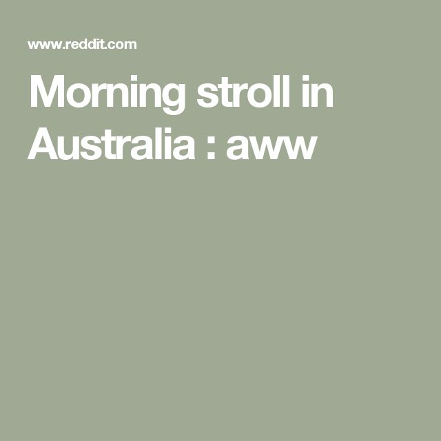 Morning stroll in Australia : aww