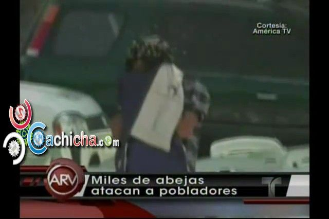 Enjambre de abejas causa temor a población En Peru #video   Cachicha.com
