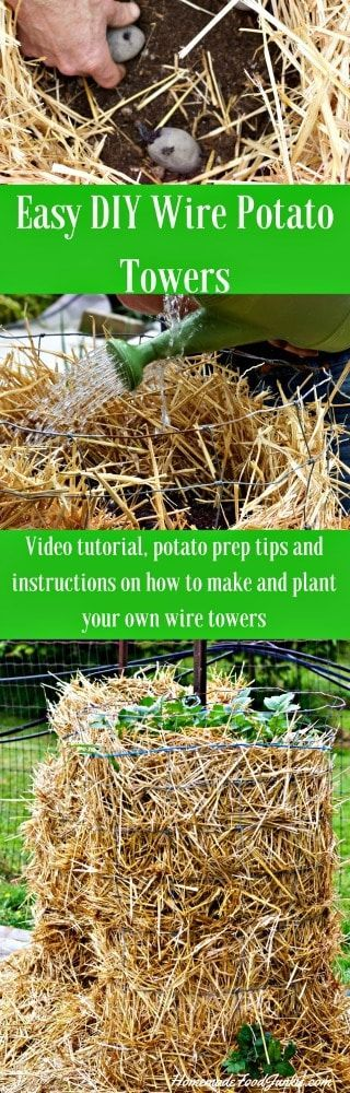 Wire Potato Towers are easy to make, and easy to harvest! They are fantastic garden space savers!
